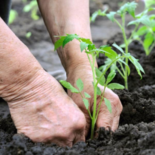 Tips for Gardening with an Arthritic Thumb