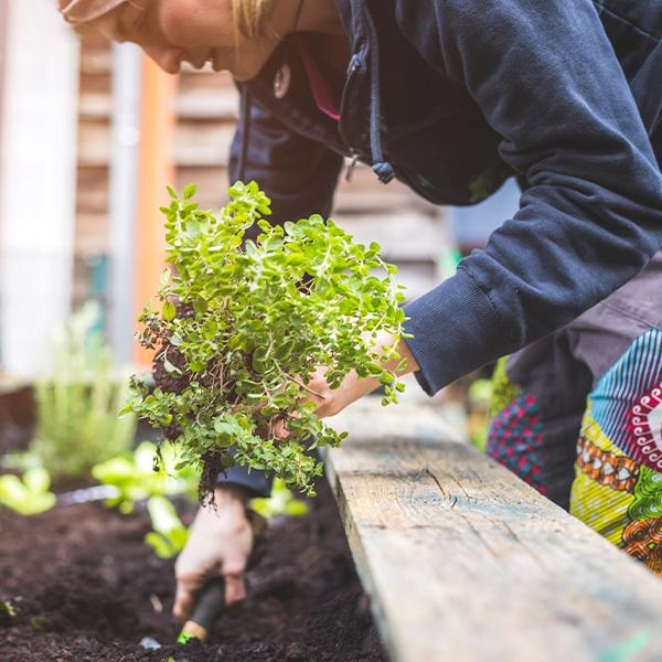 Avoid Back Pain During Gardening Season